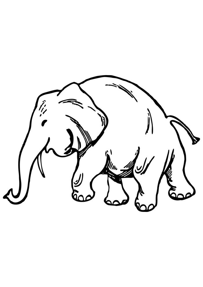 elefante para colorir 5