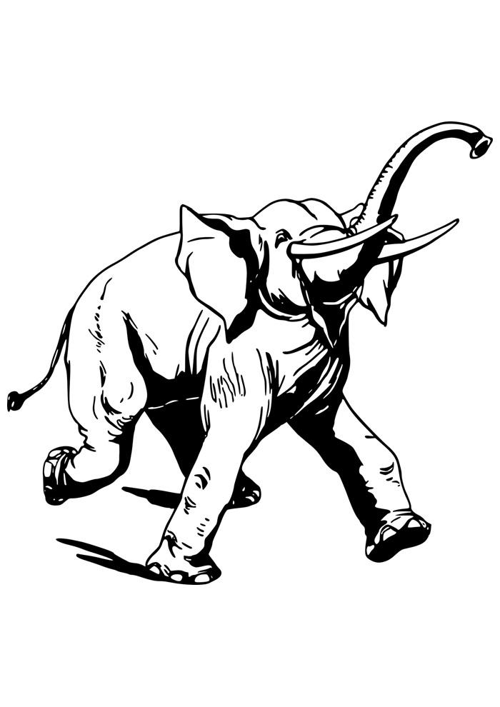 elefante para colorir 7