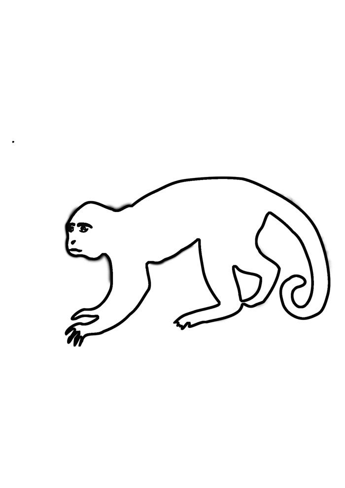 macaco para colorir 1