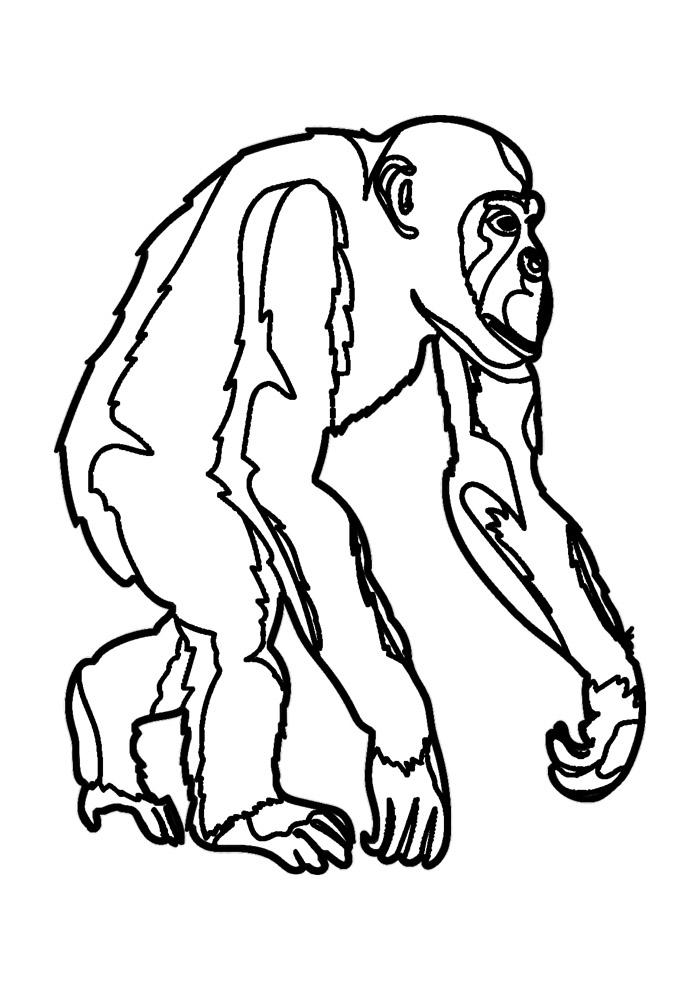 macaco para colorir 11