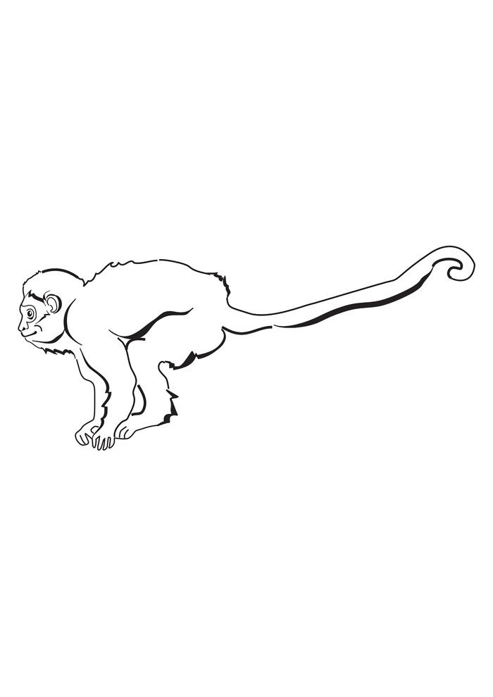 macaco para colorir 19