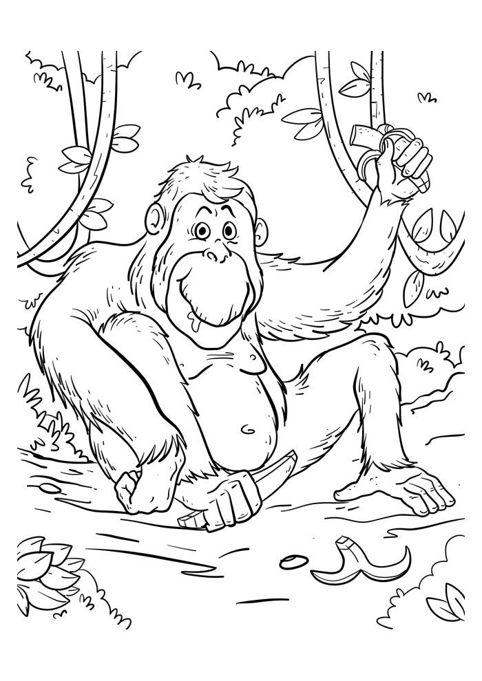 macaco para colorir 49