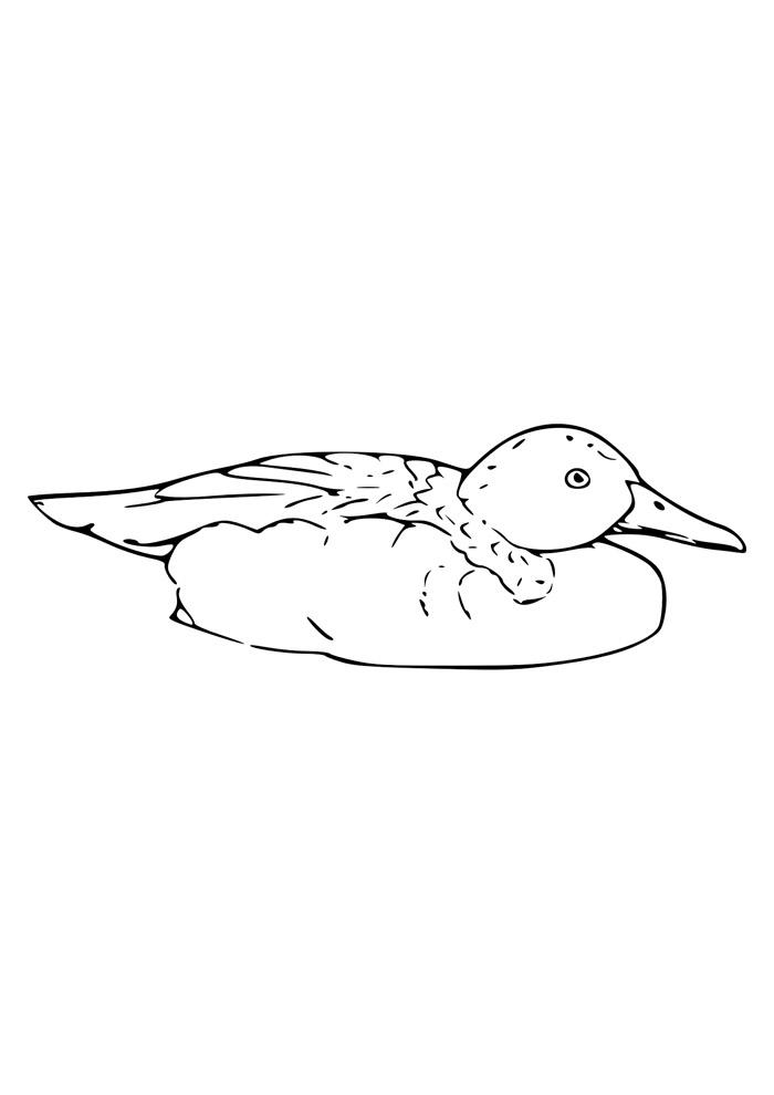 pato para colorir 12