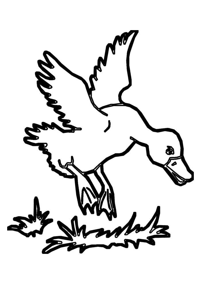 pato para colorir 13