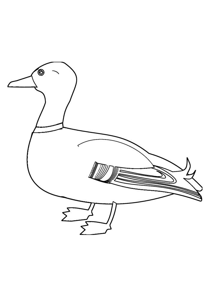 pato para colorir 16