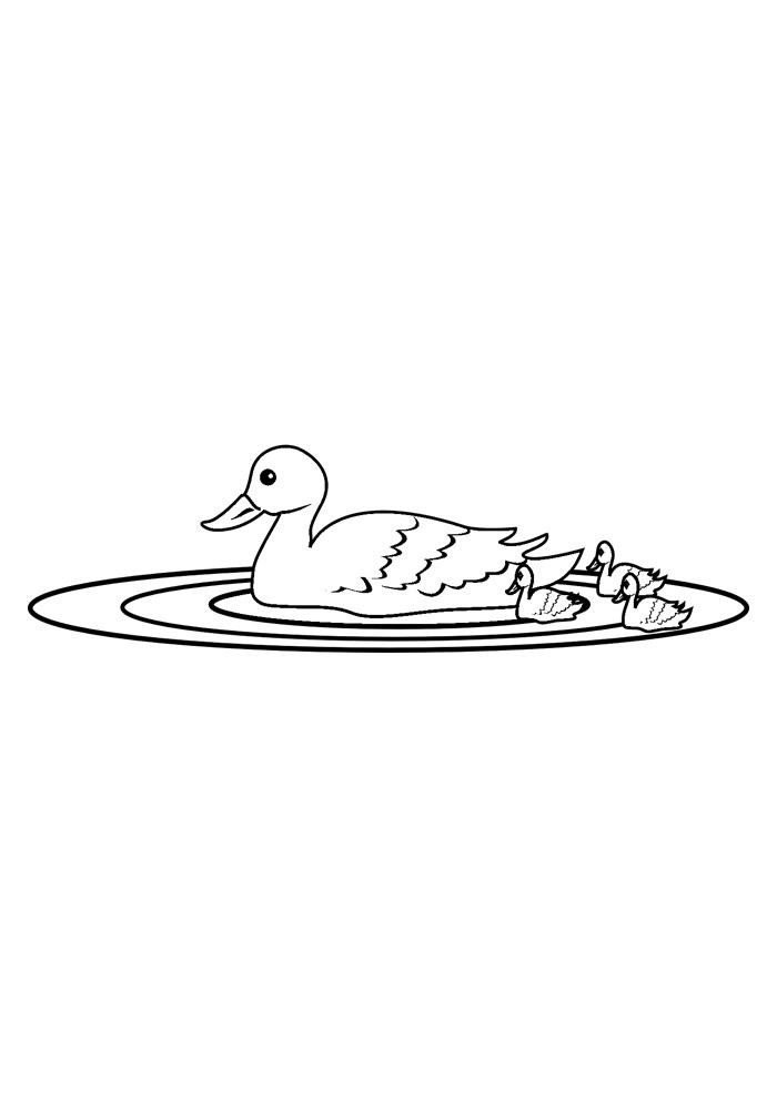 pato para colorir 18
