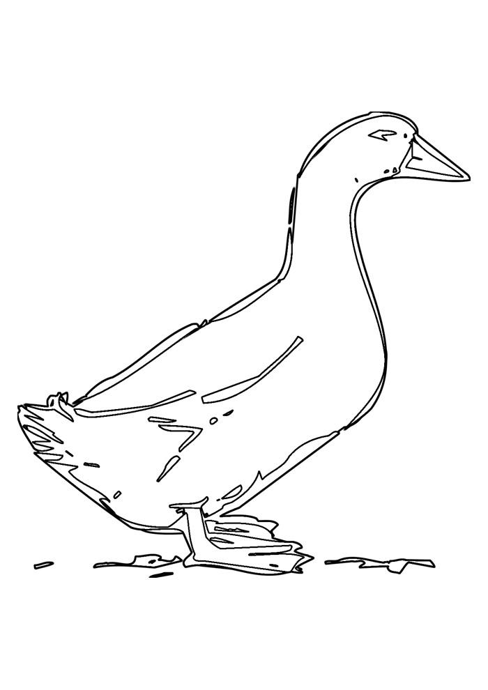 pato para colorir 25