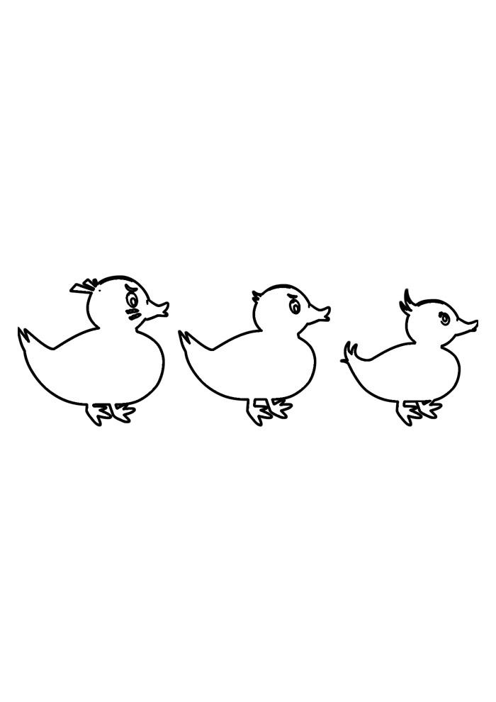 pato para colorir 26