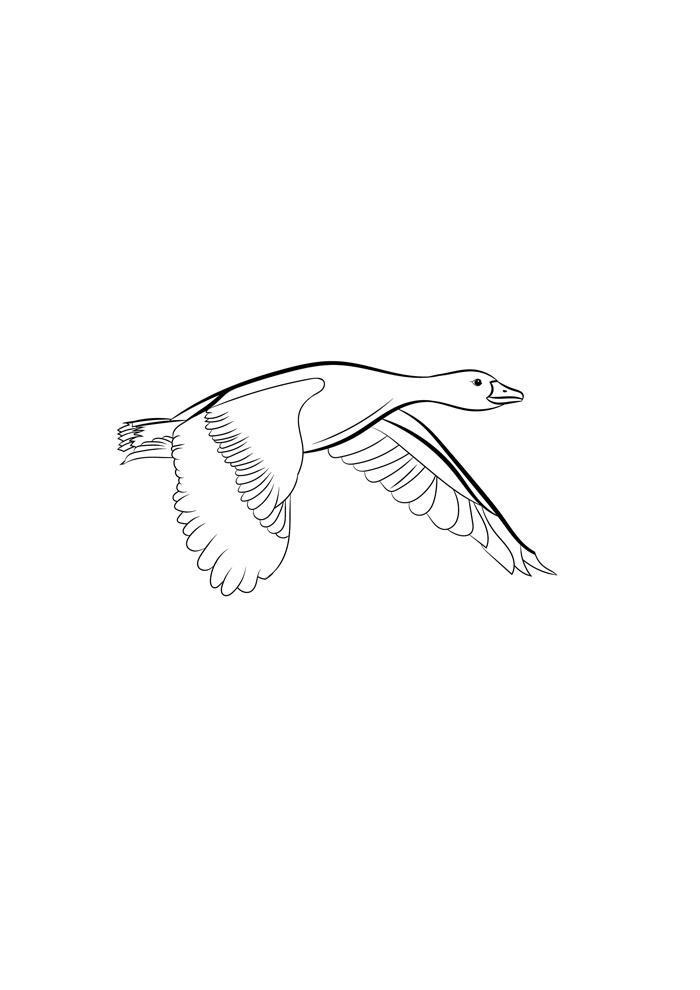 pato para colorir 28