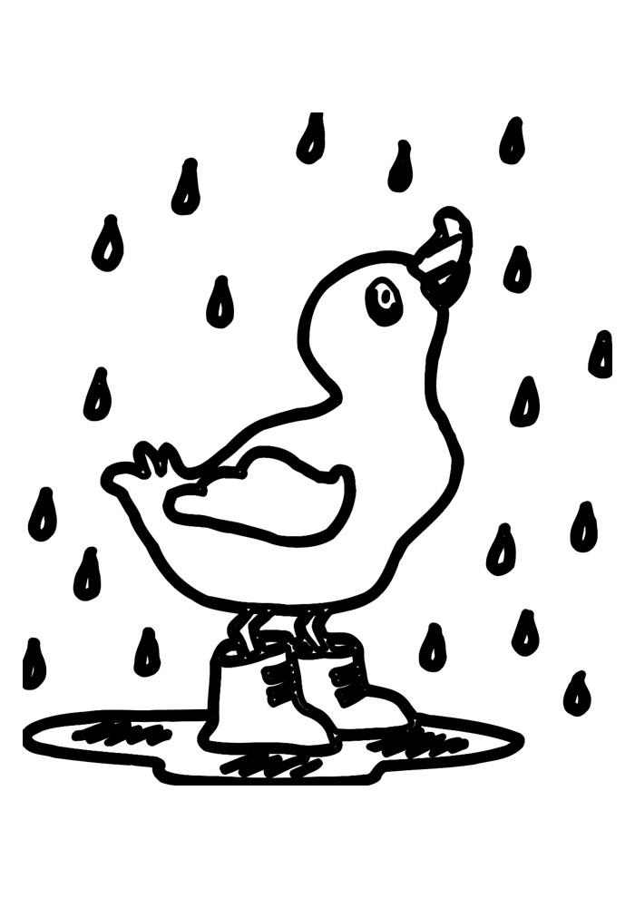 pato para colorir 36