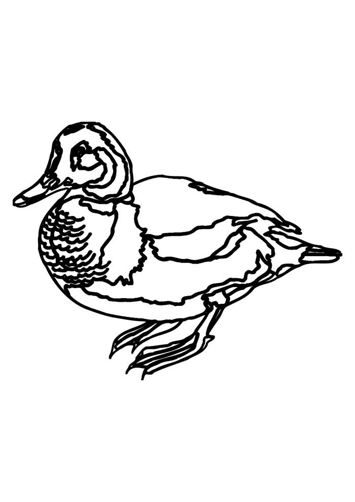 pato para colorir 37