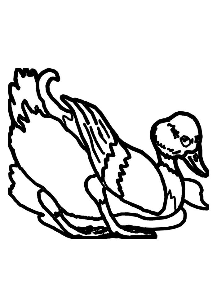 pato para colorir 4