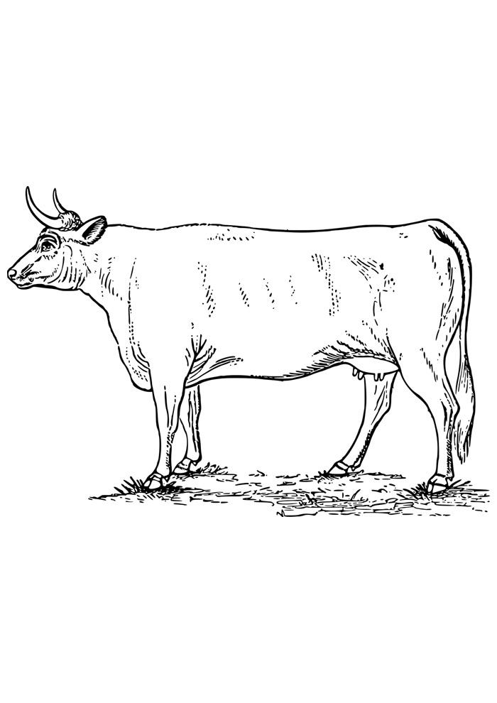 vaca para colorir 10