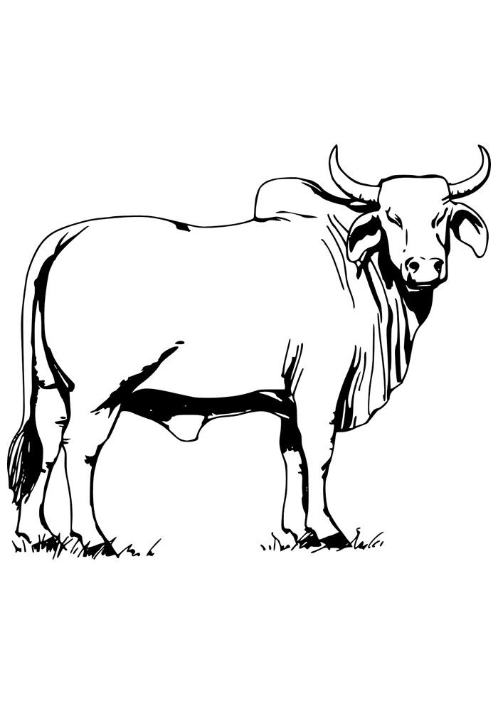 vaca para colorir 12