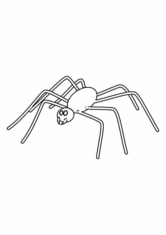 aranha para colorir 10