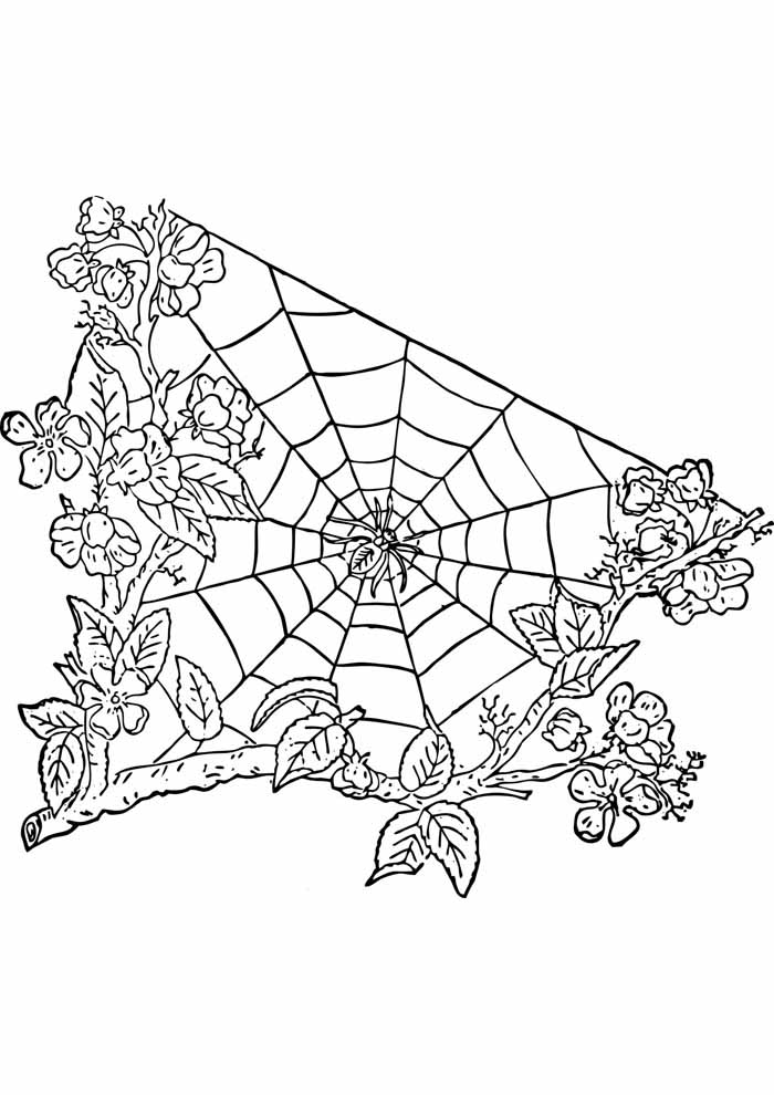 aranha para colorir 23