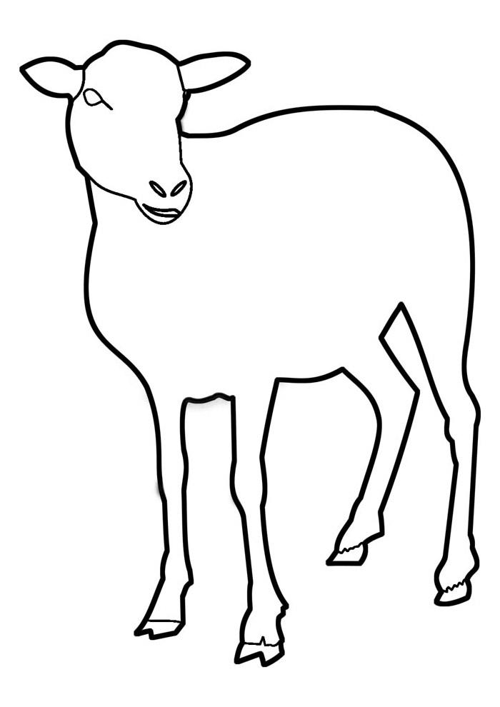 ovelha para colorir 16