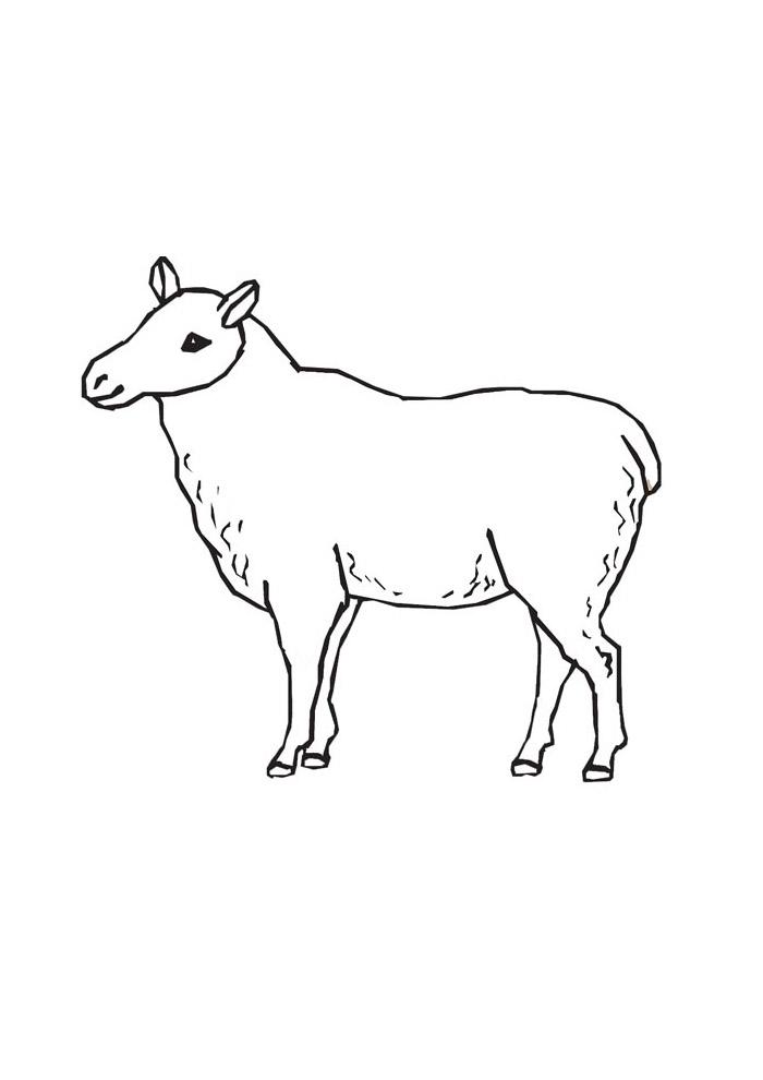ovelha para colorir 18