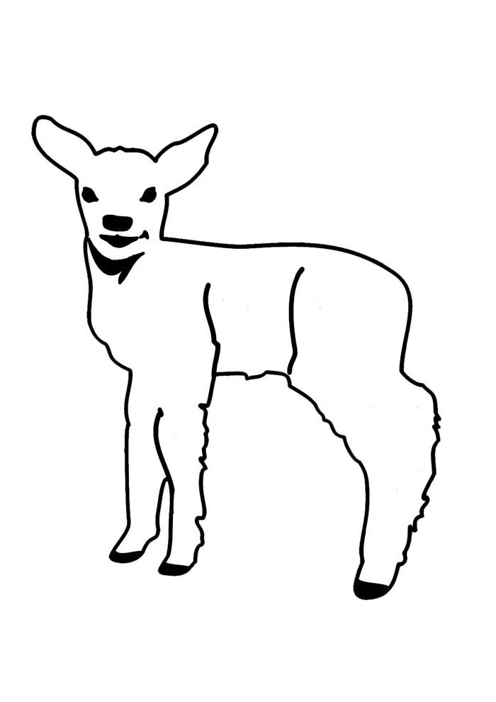 ovelha para colorir 8