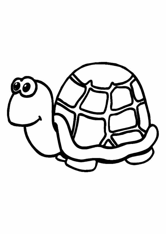 tartaruga para colorir 12