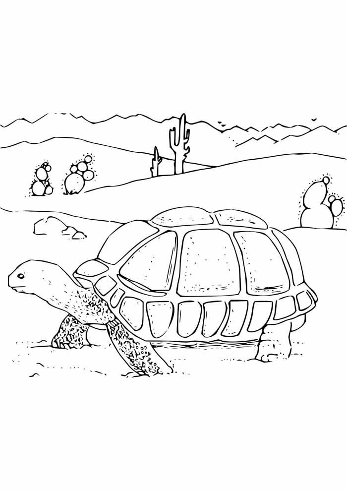 tartaruga para colorir 13