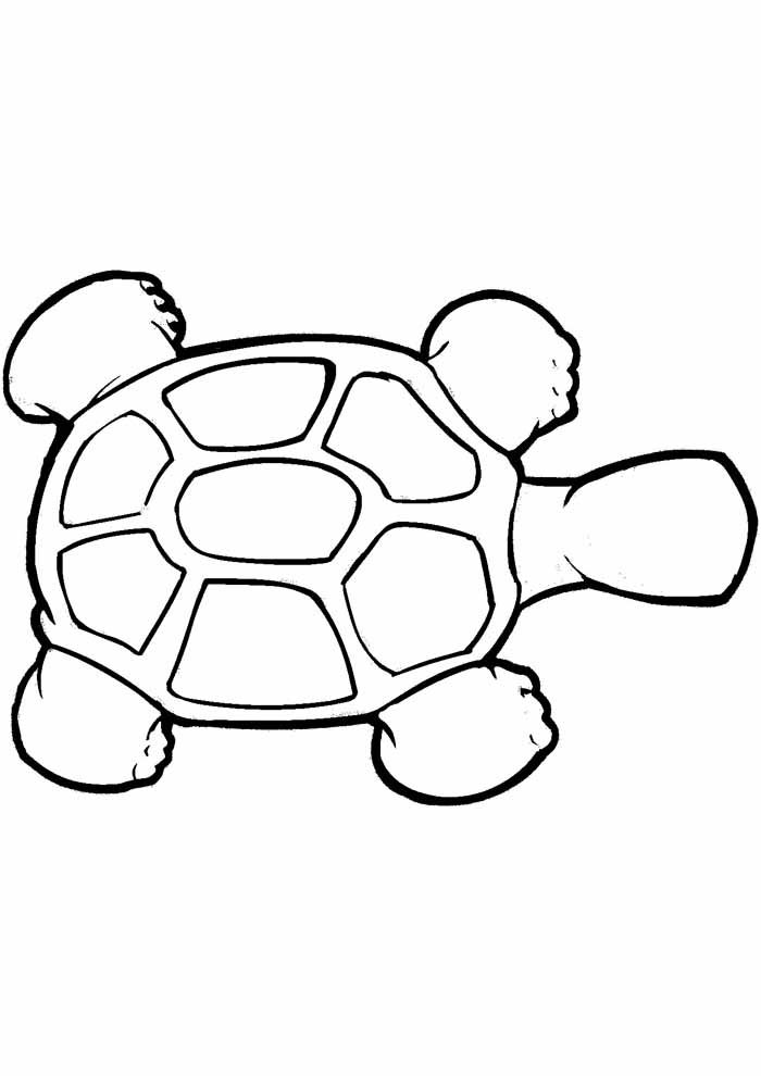 tartaruga para colorir 15