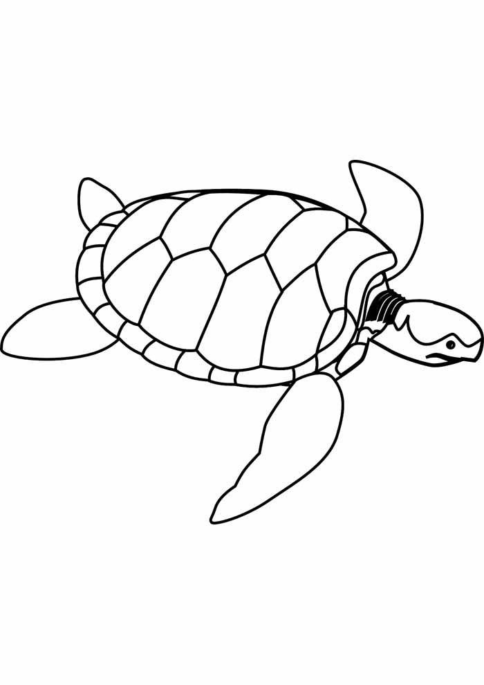 tartaruga para colorir 17