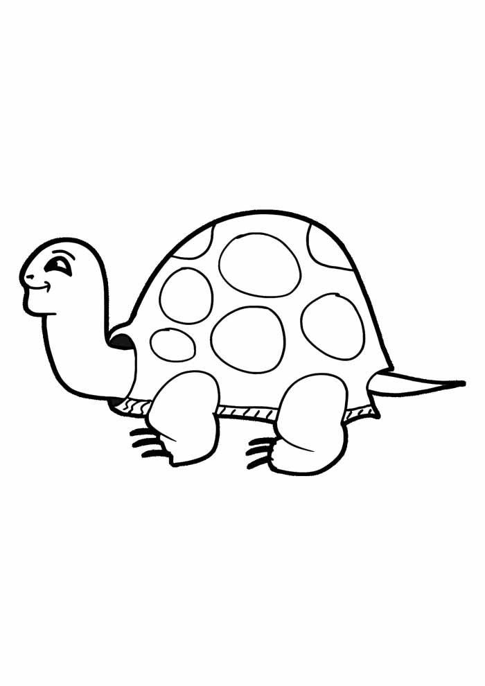 tartaruga para colorir 2