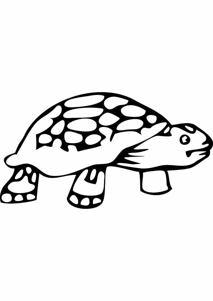 tartaruga para colorir 20