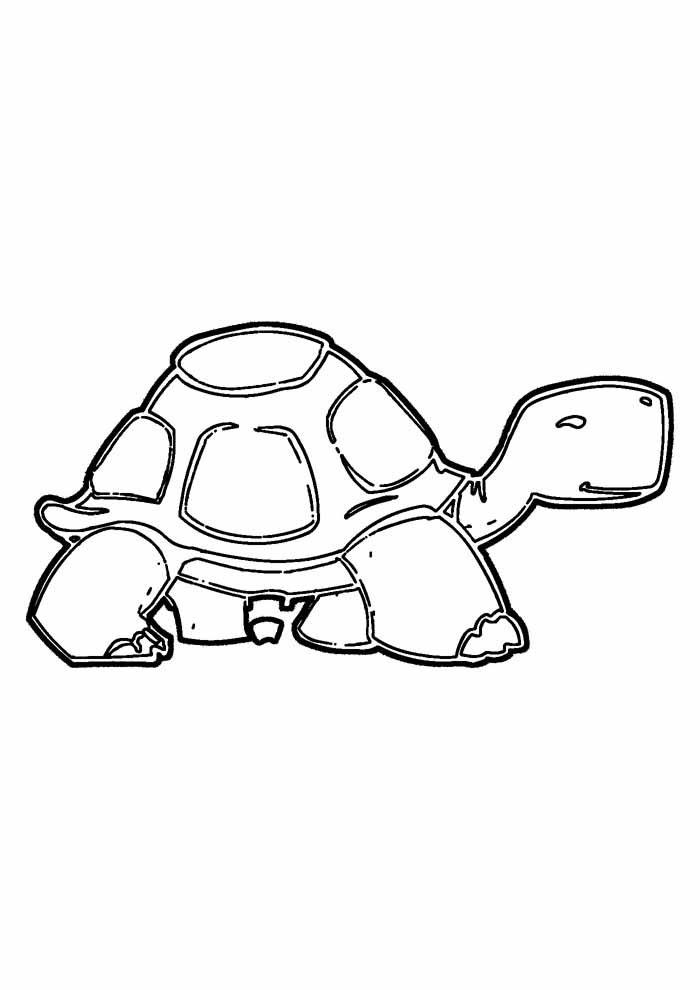 tartaruga para colorir 21