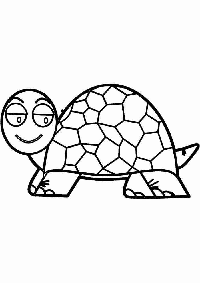 tartaruga para colorir 22
