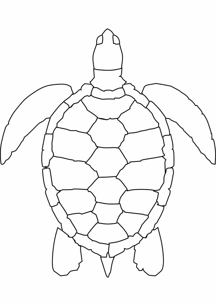 tartaruga para colorir 23