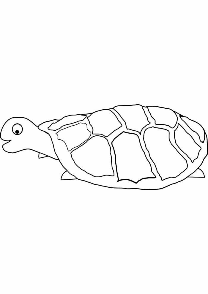 tartaruga para colorir 26
