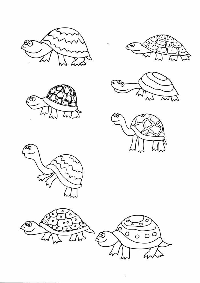 tartaruga para colorir 27