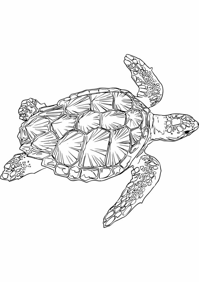 tartaruga para colorir 3