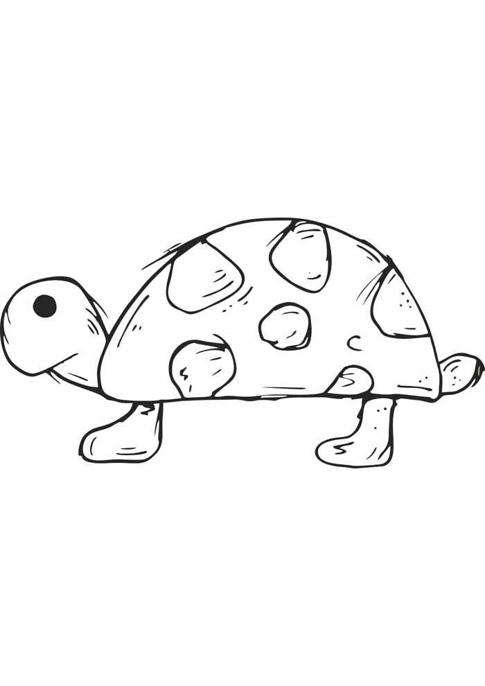 tartaruga para colorir 30