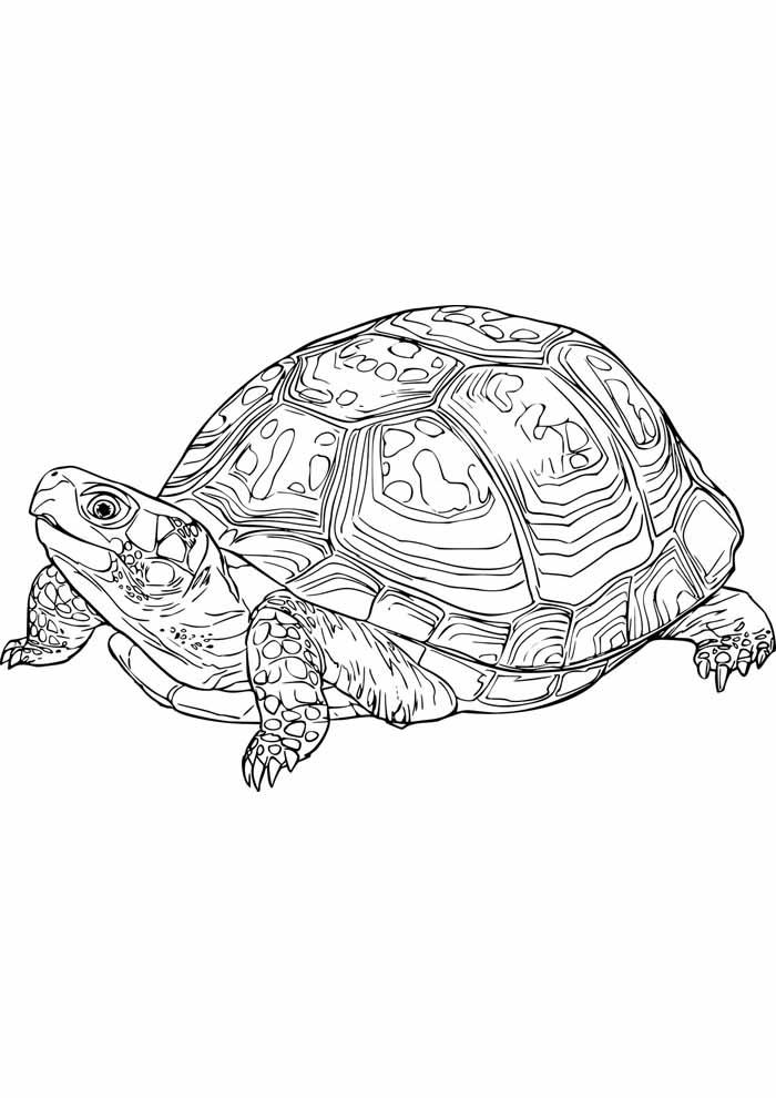 tartaruga para colorir 4