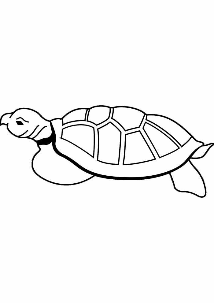 tartaruga para colorir 5