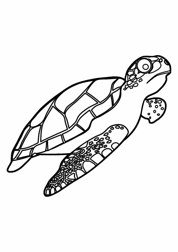 tartaruga para colorir 7